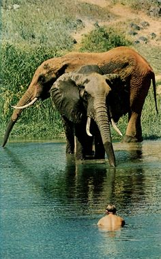 wow - swimming with elephants!