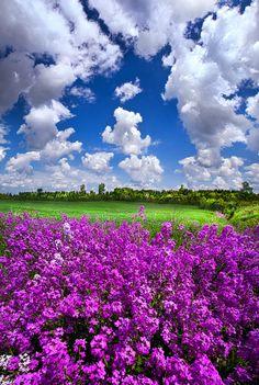 It's a beautiful world! Beautiful World, Beautiful Gardens, Beautiful Flowers, Beautiful Places, Beautiful Scenery, Cool Pictures, Beautiful Pictures, Belle Photo, Beautiful Landscapes