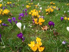 #flowers #flores #beautifulword #nature #naturaleza