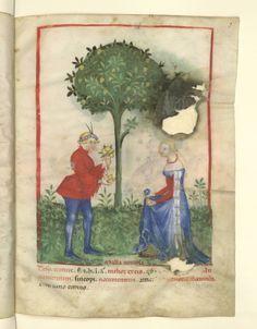 Nouvelle acquisition latine 1673, fol. 7, Récolte des pommes acides. Tacuinum sanitatis, Milano or Pavie (Italy), 1390-1400.