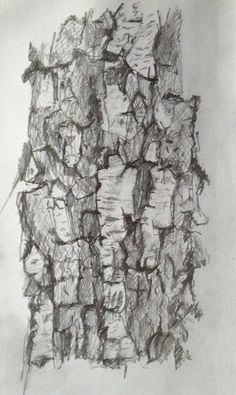 Birch tree - pencil drawing May 2013 By Jeremy Bevan