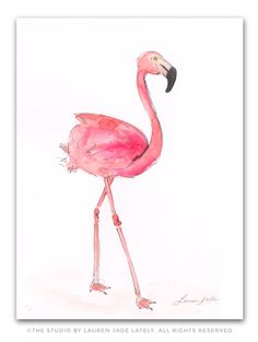 Flamingo Watercolor Illustration – The Studio by Lauren Jade Lately Flamingo Painting, Flamingo Art, Pink Flamingos, Pink Love, Pretty In Pink, Watercolor Illustration, Watercolor Art, Bird Outline, Pink Bird