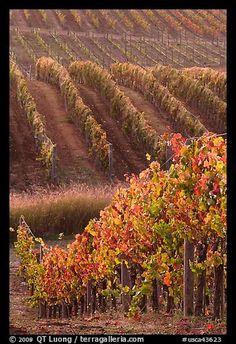 Napa Valley, Northern California