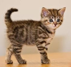 Good heavens! This tiny tiger is too cute. Read more at www.goodmorningkitten.com