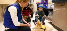 Patient Bobby Harris plays with Swoosh, a miniature Pomeranian, that visits Children's Hospital with its owner and volunteer Michelle Thomps... I wanna do this :)