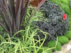 Scleranthus Biflorus (NZ Moss),   Phormium Dark Delight and I think Carex 'Evergold'.  The red flowering plant is a dahlia fern.