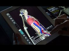 teamLabBody 3D human anatomy app