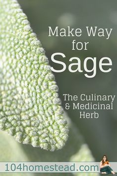 Sage (Salvia officinalis) is commonly referred to as common sage, or garden sage, butcommondoesn't do it justice and it deserves a space in the garden.