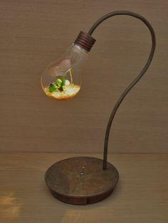 bulb terrarium | iichi(いいち)