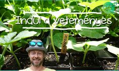 Gardening, Minden, Vegetables, Plants, Youtube, Gardens, Lawn And Garden, Vegetable Recipes, Plant