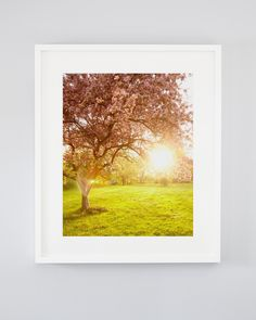 May's Glow. Pink cherry blossom art photograph by Jennifer Squires. Pink Cherry Blossom Tree, Blossom Trees, Fine Art Photography, Landscape Photography, Nature Photography, Nautical Prints, Tree Art, Large Wall Art, Nature Pictures