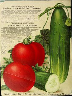 Northrup King & Co Seedsman Catalogue - Sterling Seeds - 1910