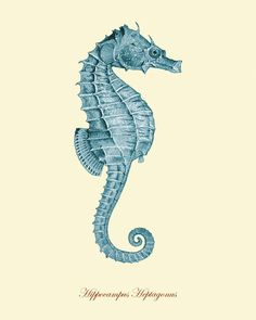 nautical design and organization : #art #drawings #seahorse #blue