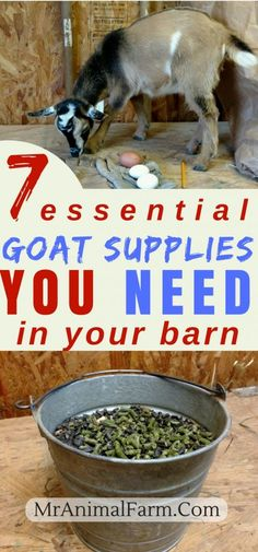 These 7 essential goat supplies will help you get started on your journey to raising goats. These 7 essential goat supplies will help you get started on your journey to raising goats. Mini Goats, Cute Goats, Baby Goats, Keeping Goats, Raising Goats, Raising Farm Animals, Cabras Boer, Goat Playground, Goat Shelter