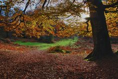 Enchanted forest, Urbasa, Navarre, Spain by F2eliminator Travel Photography, via Flickr