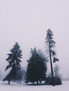 vertical mobile image of evergreen trees in a winter fog by Tina Crespo I Love Winter, Winter Is Coming, Hello Winter, Winter Trees, Beautiful World, The Great Outdoors, Winter Wonderland, Nature Photography, Digital Photography