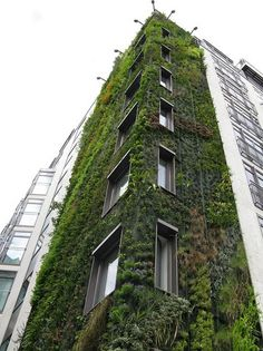 a few overgrown weeds to brighten up a stale building. vertical garden art by Patrick Blanc. This needs to be happening a lot more. Everywhere