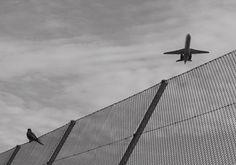 bird with plane Zurich, Utility Pole, Plane, Bird, Aircraft, Birds, Airplanes, Airplane