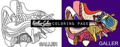 Ear coloring, Anatomy coloring book, Medical Surreal adult coloring book, coloring pages, adult coloring pages, printable co