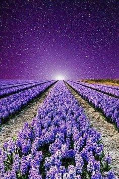 Fields of Purple Lavender Purple Love, All Things Purple, Shades Of Purple, Purple Flowers, Purple Sky, Hyacinth Flowers, Purple Tips, Beautiful World, Beautiful Places