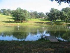 ponds - Bing Images