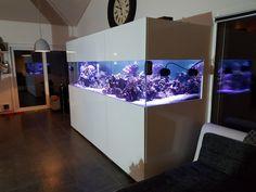 Aquarium Aquarium, David, Goldfish Bowl, Aquarium Fish Tank, Aquarius, Fish Tank