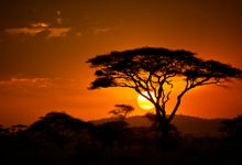 On the 12 day Best of East Africa Safari, you experience the premier game viewing areas in both Kenya and Tazania Beautiful World, Beautiful Places, African Sunset, Gear Art, Meet Locals, Adventure Holiday, Amazing Sunsets, Game Reserve, Nature Tree