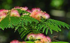 Gyönyörű virágok Wallpapers HD