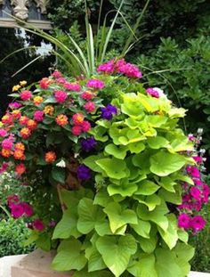 Planter of mixed flowers & greenery