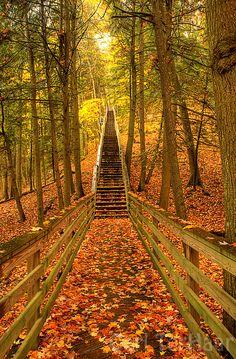 Stairs to Iargo Springs, Au Sable River, Michigan