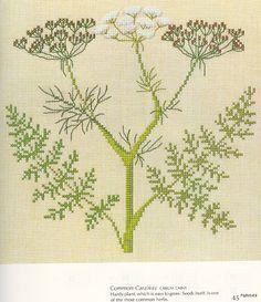Gallery.ru / Фото #36 - Medicinal Plants - Mosca