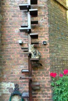 CAT -LADDERS