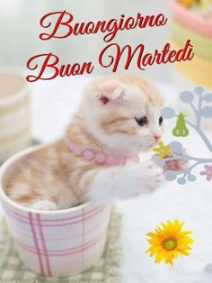 Good Morning, Happy Tuesday, Quotes, Buen Dia, Bonjour, Good Morning Wishes