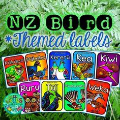 New Zealand Native Bird Labels {Editable} Classroom Displays, Classroom Ideas, School Resources, Teaching Resources, Wood Pigeon, Different Birds, Maori Art, Bird Theme, Parrot Bird