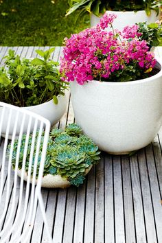 pot plants. mixing succulents with traditional floral plants