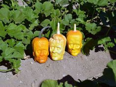 These pumpkins resemble Frankenstein, no carving required.