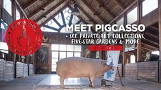 See the work of and meet Pigcasso, the painting pig who's been featured on SKY, BBC and CNN as Art Franschhoek takes place in the art and wine town Friday 25 to Sunday 27 October 2019. You'll also be able to see private art collections and magnificent gardens.