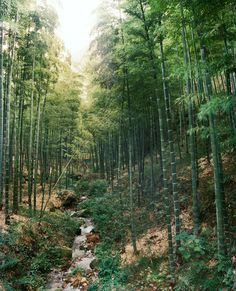 53d9c0a9dcd5888e14599d71_moganshan-naked-bamboo-forest-0212.jpg (1024×1263)