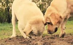 Video: Why Does My Dog Dig?
