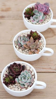 10 cool ideas to use the succulents in the decoration 10 coole Ideen, um die Sukkulenten in der Dekoration. Succulent Arrangements, Cacti And Succulents, Planting Succulents, Planting Flowers, Succulent Decorations, Terrarium Decorations, Propagate Succulents, Succulents In Containers, House Plants Decor