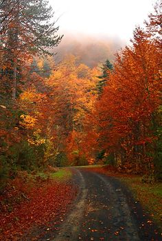 "Burst of color in the ""Royal Forest"". Kastania, Thessaly, Greece (by Hercules Milas) Beautiful World, Beautiful Places, Autumn Scenes, Seasons Of The Year, Fall Pictures, Fall Season, Belle Photo, The Great Outdoors, Mother Nature"