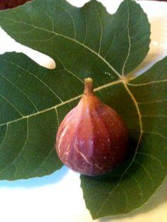 Fig and Leaf copy - good