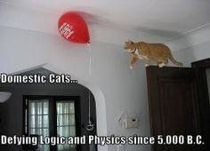 Cats Defying Physics - Likes