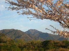 菰野町大羽根園地区 大羽根園公園  後方は「釈迦ヶ岳」  平成24年4月15日早朝撮影