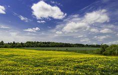 Yellow dandelions by Vladlen Tsiskarishvili on 500px