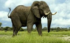 15 Best Elephants And Zebra S Images Elephant Animals Elephant