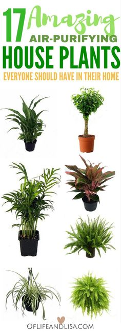 18 Must-Have House Plants that Will Clean and Purify Your Indoor Air