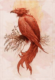 """Phoenix"". A fabulous bird that periodically regenerated itself, used in literature as a symbol of death & resurrection. According to legend, the phoenix lived in Arabia. When it reached the end of its life (500 years), it burned itself on a pyre of flames, & from the ashes a new phoenix arose. As a sacred symbol in Egyptian religion, the phoenix represented the sun, which dies each night & rises again each morning. According to Herodotus the bird was red & golden and resembled an eagle."