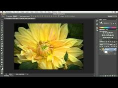 ▶ Photoshop CC tutorial: Creating a painting with the Oil Paint filter | lynda.com - YouTube