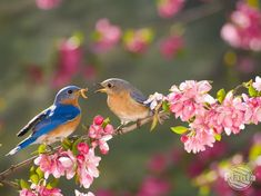 Jak zaprosić ptaki do ogrodu